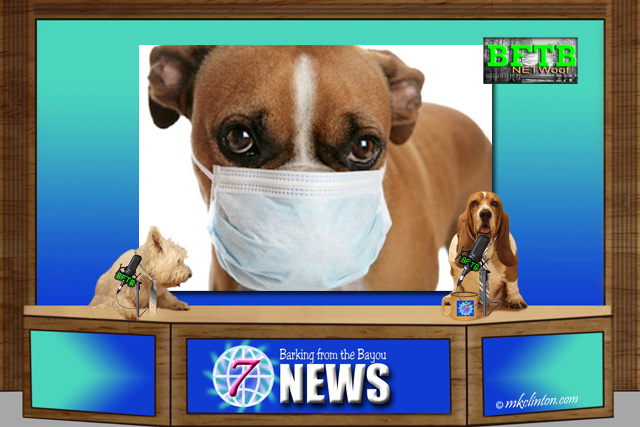 BFTB NETWoof News about canine flu vacines