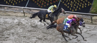Two Horses Die In First Four Races Of Preakness Saturday