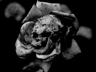 Mio ritocco in bianco e nero, con luminosità diminuita e contrasto aumentato, di un'immagine che ritrae una rosa appassita dalle sembianze di un teschio, trovata per caso su Google. Link a fine post.