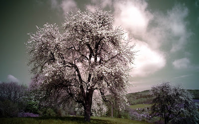 white tree widescreen resolution hd wallpaper