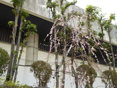大阪天満宮・境内の梅