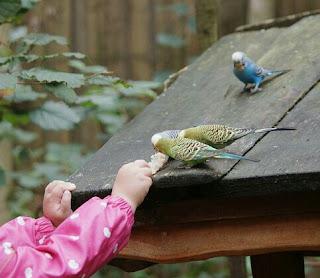 Makanan Burung Kenari Yang Bagus Biar Cepat Gacor