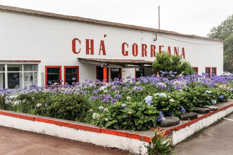 Plantacja herbaty Cha Gorreana