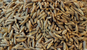 Cumin Seeds / Jeera Prevents Cancer