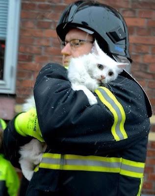 Foto - Foto Mengharukan Saat Kucing Di Selamatkan Petugas Pemadam Kebakaran