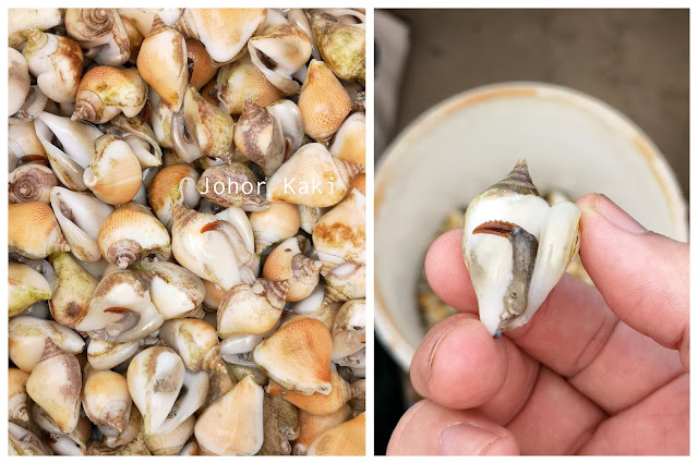 Gong Gong Sea Snail