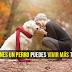Si Tienes un Perro Puedes Vivir más Tiempo. Descubre Por Qué