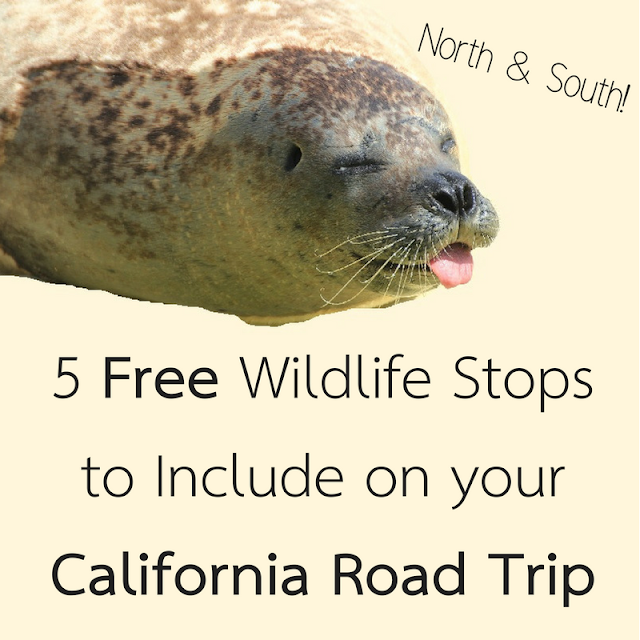 5 Free Wildlife Stops to Include on your California Road Trip