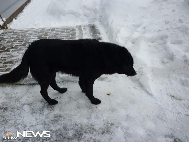 МВД составило список потенциально опасных собак