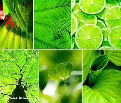 warna warni keindahan alam