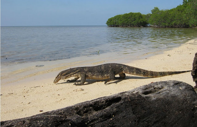 1. Pulau Biawak - Indramayu