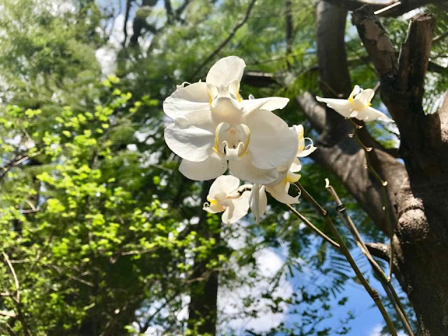 Oficina de cultivo de orquídea