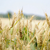 Finance Commission: Expert Group on Agriculture Exports