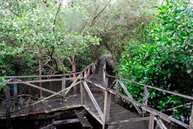Pentingnya Menjaga Hutan Mangrove Bagi Kehidupan Masyarakat