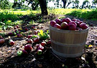 A bushel of apples by kathy stutzman