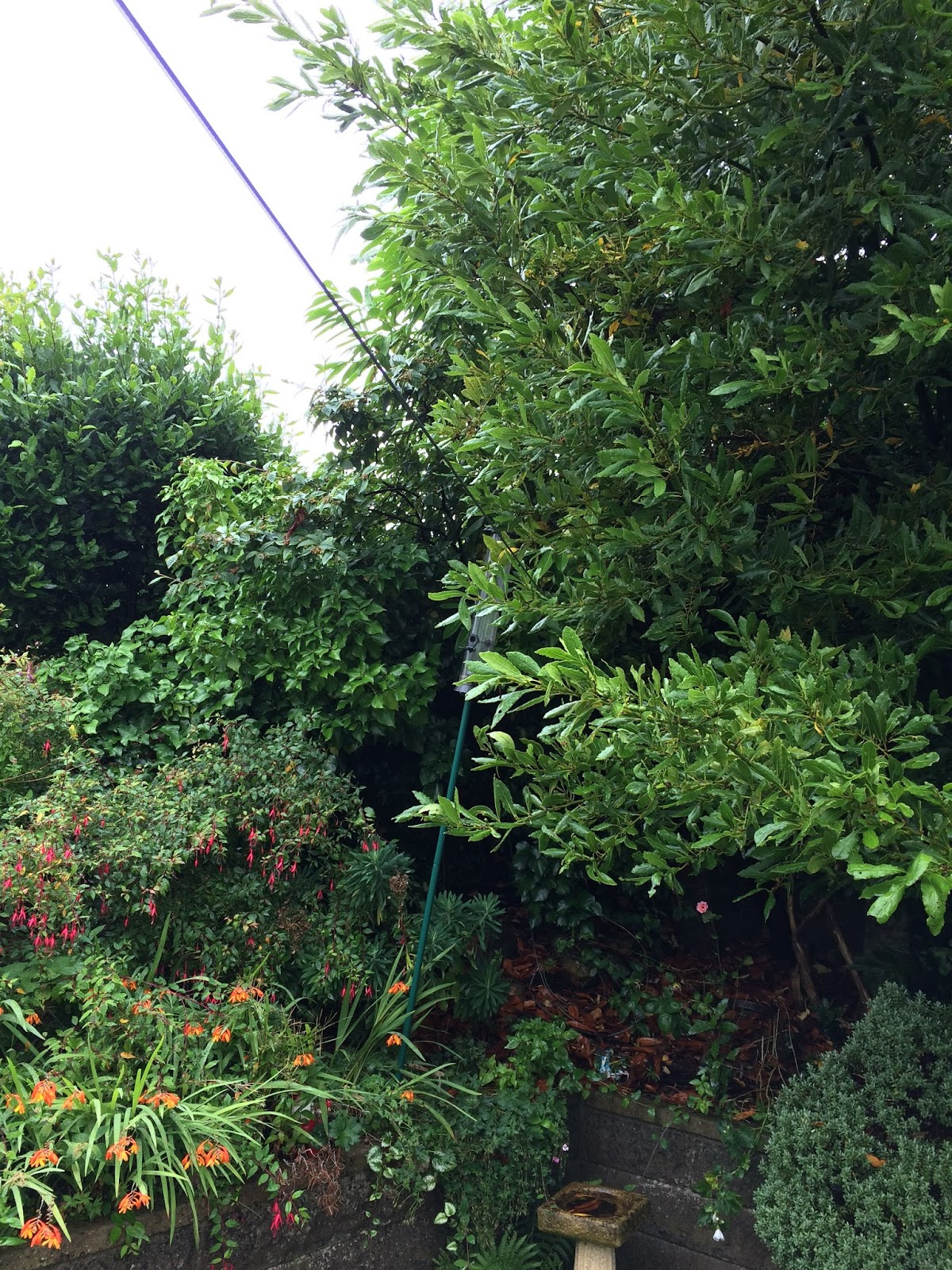 garden clean up - the corner of the Hobbis family back garden