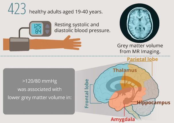 図:高血圧と灰白質体積