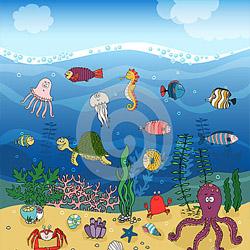 Ekosistem Laut Mari Mengenalnya Ciri Dan Klasifikasinya