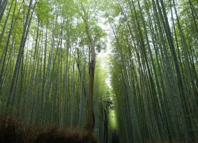 Kyoto, Anda Harus Tau Semua Tentang Kyoto Jepang