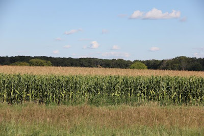 conventional cornfields can cause cloudy creeks