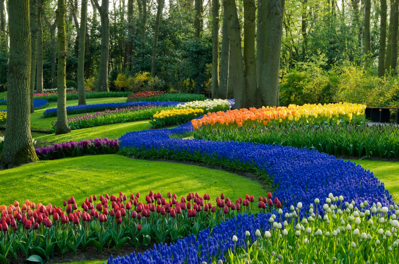 A Garden Is Place Where Different Types Of Plants Specially Flowers And Vegetables Are Cultivated Gardening As Hobby Not Only Pleasurable But Also