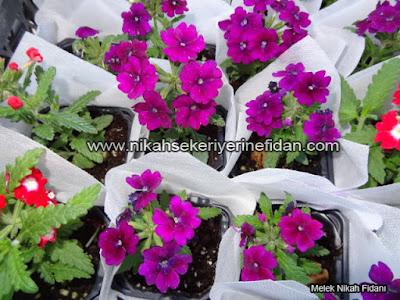 çiçek nikah fidanı İzmir Elif Başar - 7