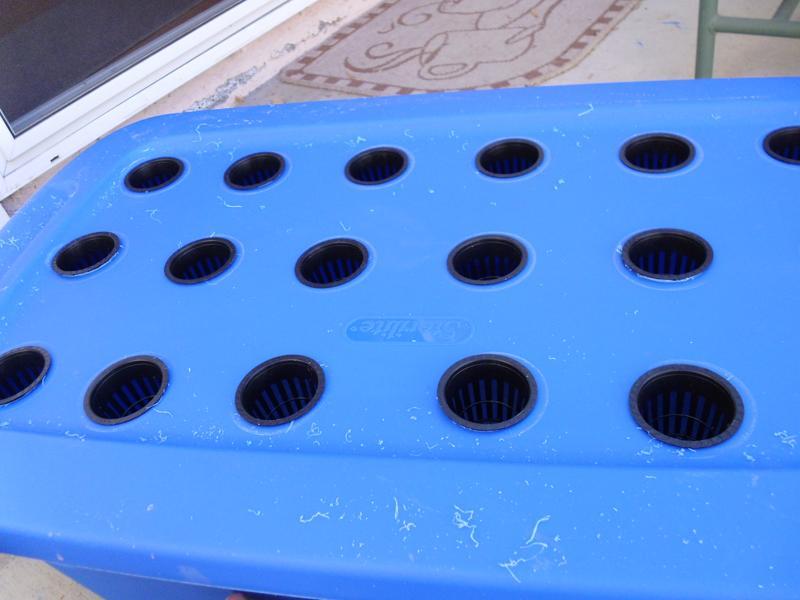 2 inch netpots in DWC Hydroponic setup