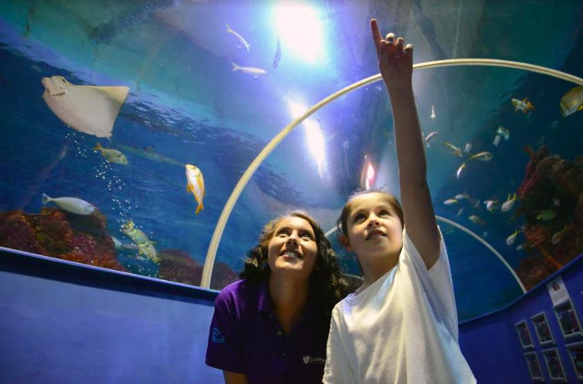 Disney On Ice Weekend at Blue Reef Aquarium  (Kids Go Free)