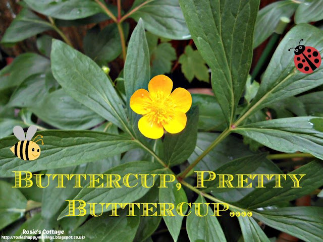 Buttercup pretty buttercup
