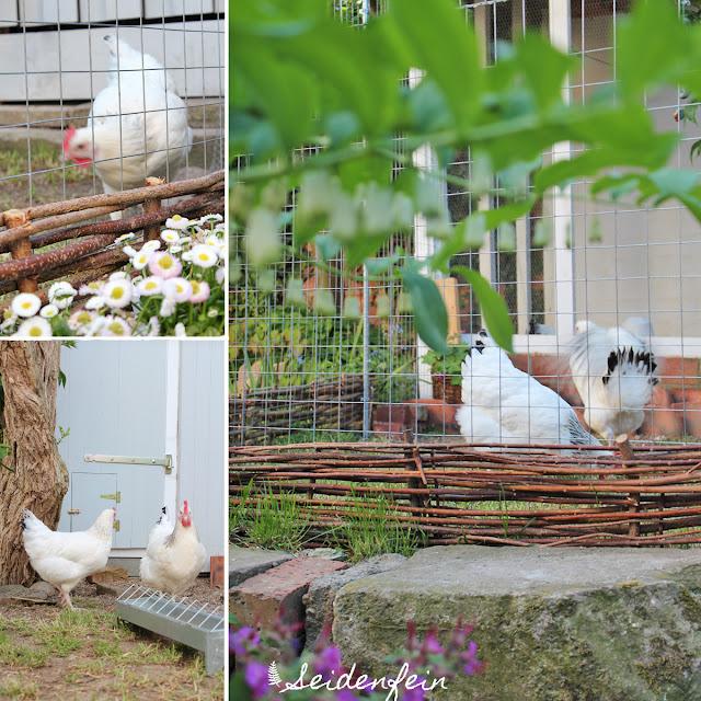 seidenfeins Blog vom schönen Landleben: Hühner - Kuchen - Gartenzeit ...