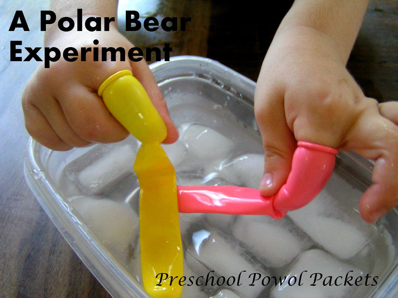 polar bear fur experiment amp poppins book nook preschool