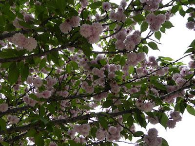 深北緑地公園 タカマツチゴ(高松稚児)