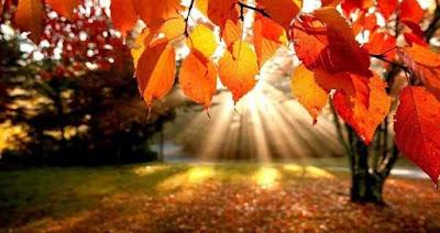 Khép lại mùa thu - Góc thơ