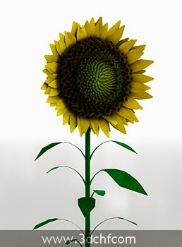 sunflower 3d model