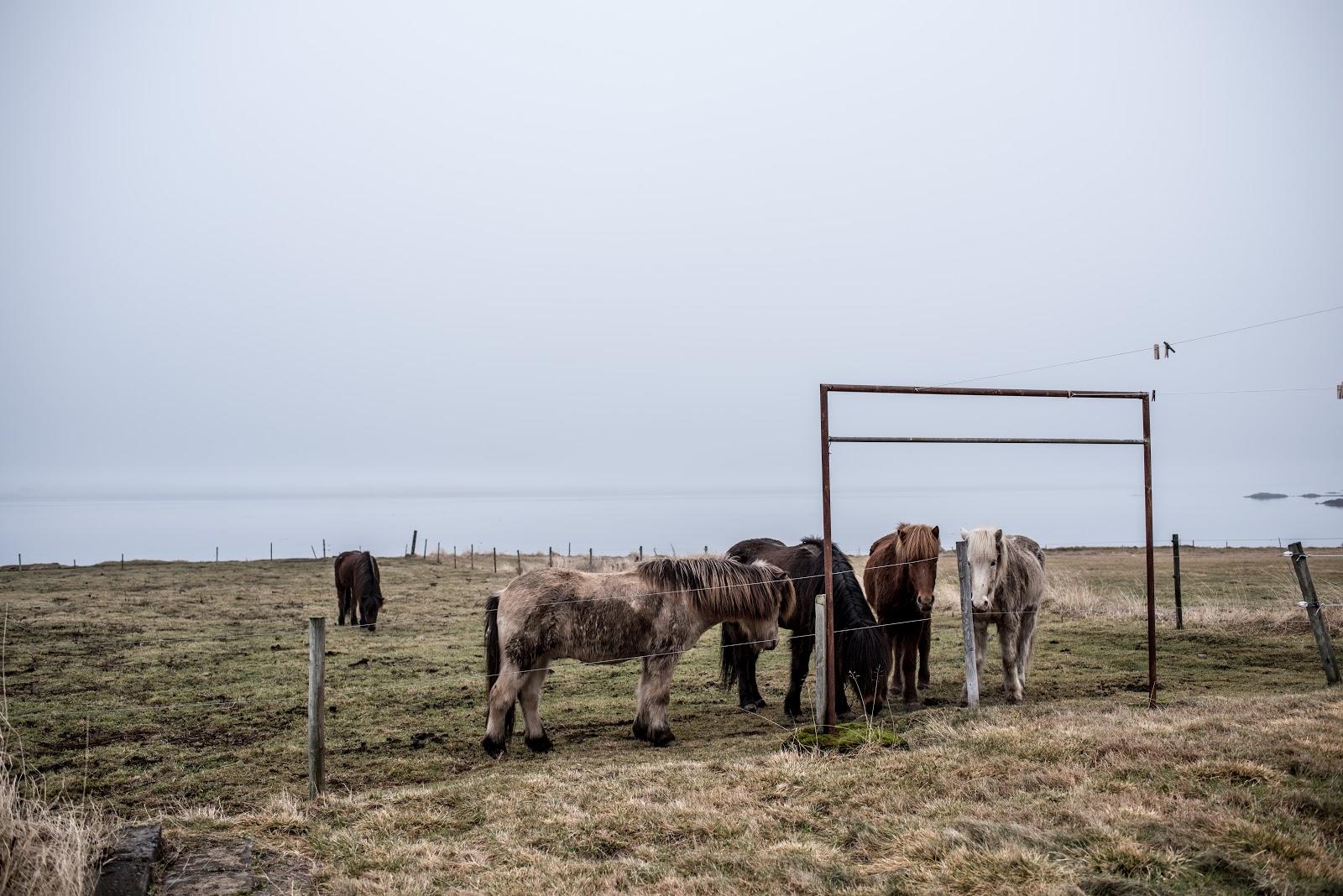 von vogue iceland travel akureyri iceland horse