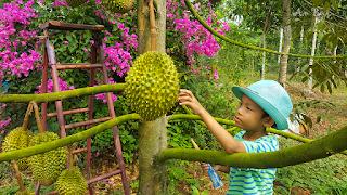 Tour du lịch vườn trái cây Cẩm Mỹ, Đồng Nai 1 ngày