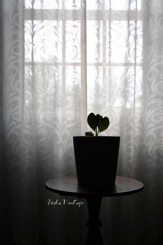 Esta es una de las mejores épocas para poner a punto tus plantas de interior y exterior, hoy veremos como hacerlo.