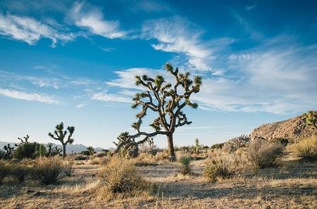 desert-landscape-450