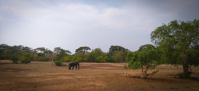 Another elephant; Yala National Park, Sri Lanka
