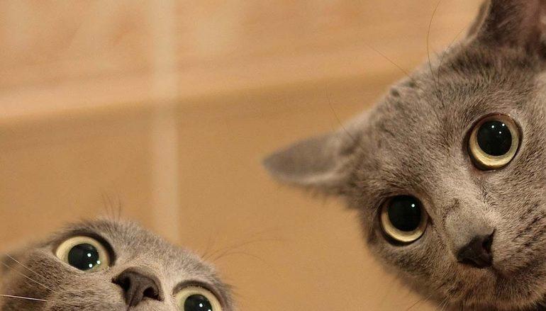 Γιατί τρελαίνονται οι γάτες μέσα στα μαύρα μεσάνυχτα;