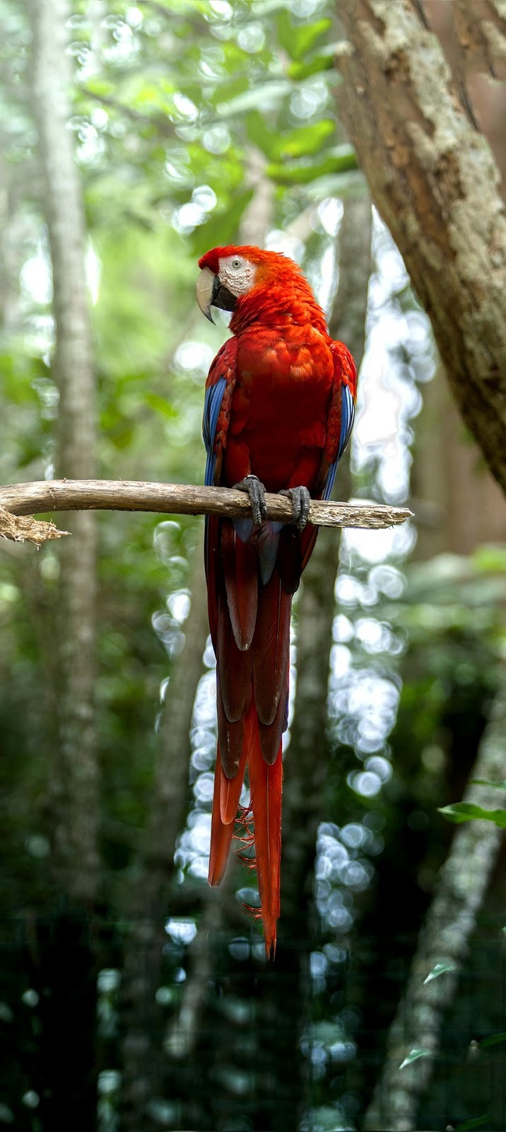 A parrot displays it's beauty.