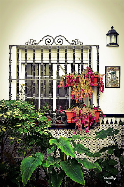 Patio andaluz | Blanca Arias