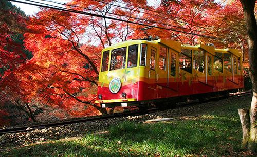 Takaosan Momiji Matsuri, Mt. Takao, Kiyotaki cable car Sta., Hachioji, Tokyo