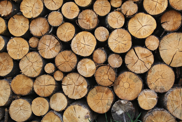 testa legno