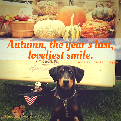 doberman rescue dog fall autumn mack truck pumpkins
