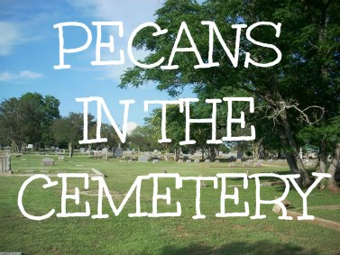 Pecans in the cemetary