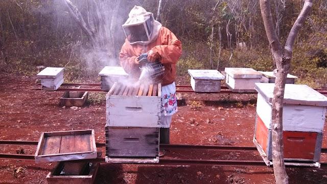 Conquista miel mexicana mercados internacionales por su calidad y sabor