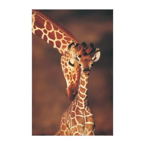 Mother Giraffe With Calf | Lovely Wildlife Photo Canvas