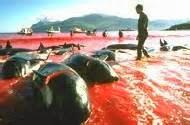 Les dauphins massacrés gisent sur la plage