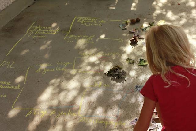 classification des végétaux découverte du monde IEF homeschooling